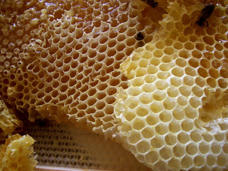 Információk a méhpempőről