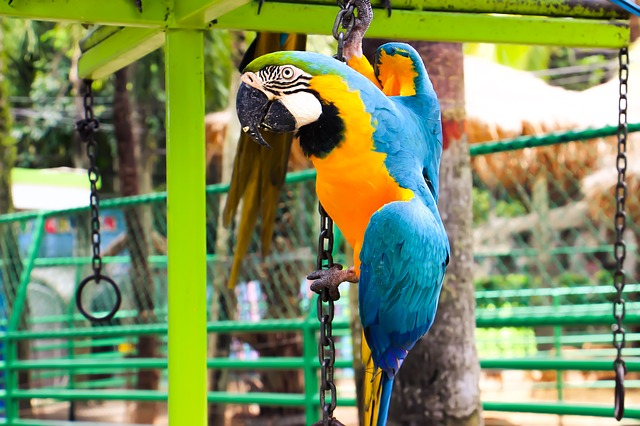 A madaraknak is vehető kisállat ketrec