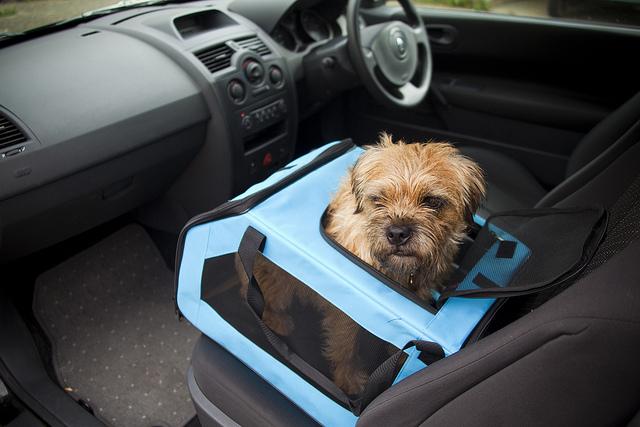 Miért hasznosak a kutyahordozók?